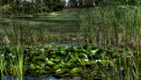 Golf course pond [HDR] by luss007, Photography->Landscape gallery