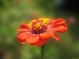 Nice 'N' Easy by Hottrockin, Photography->Flowers gallery