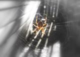 Arachnid by susivinh, Photography->Animals gallery