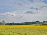 Yellow Field by bfrank, photography->landscape gallery