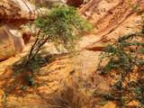 Acacia by Pistos, photography->gardens gallery