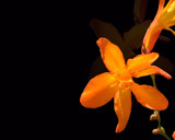 Citrus Burst by Shewolfe, Photography->Flowers gallery