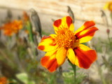 O&Y Flower by StarLite, photography->flowers gallery