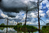 Nature's Lightning Rods by 100k_xle, Photography->Landscape gallery