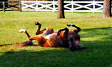 Horse Play by SatCom, Photography->Animals gallery
