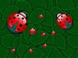 Ladybug two by gabriela2006, Illustrations->Digital gallery