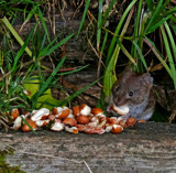 I love nuts by biffobear, photography->animals gallery