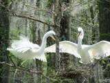 Nesting  13 by 100k_xle, Photography->Birds gallery