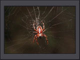 Happy Caedes Anniversary by boremachine, photography->insects/spiders gallery
