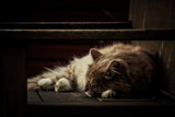 Cat Napping by Eubeen, photography->pets gallery