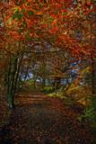 Fall walk by biffobear, photography->landscape gallery
