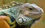 Pop by nigelmoore, Photography->Reptiles/amphibians gallery