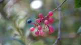 Berries by CraigFoote, photography->macro gallery
