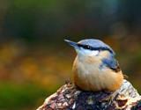 Wary by biffobear, photography->birds gallery