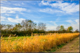 'Golden' Reeds by corngrowth, photography->landscape gallery