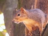 Rodent Interrupted by regmar, photography->animals gallery
