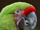 Hello?? by Paul_Gerritsen, Photography->Birds gallery