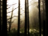 Escape the Mist by mayne, Photography->Landscape gallery