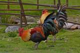 Do the by biffobear, photography->birds gallery