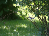 Bird by Lithfo, Photography->Birds gallery
