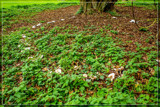 Fairy Circle by corngrowth, photography->nature gallery