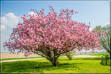 Polder Blossom by corngrowth, photography->landscape gallery