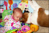Puppies by Nikoneer, photography->people gallery