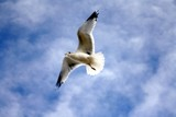 Flight of Inspiration 1 by BrandyAdams77, Photography->Birds gallery