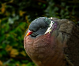 Shush.... by biffobear, photography->birds gallery