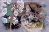 Feline & Flowers for Foofy Friday by mesmerized, photography->manipulation gallery