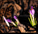 Breaking Ground by tigger3, photography->flowers gallery
