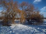 Three trees by biffobear, photography->landscape gallery