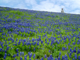 Bluebonnet Heaven by Timeless_Photo, Photography->Flowers gallery