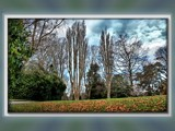 Garden Walk - Bare Branches by LynEve, Photography->Landscape gallery