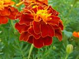 Flower by Leafarik, Photography->Flowers gallery