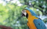 Parrot by jersey, Photography->Birds gallery