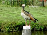 Say again by rvdb, photography->birds gallery