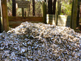Recycled Oysters by Mvillian, Photography->General gallery