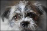 Tessa by quickshot, photography->animals gallery