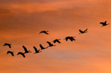 Destination: Africa! by ppigeon, photography->birds gallery