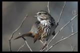 Not camera shy by garrettparkinson, photography->birds gallery