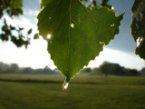 Just a Drop of Sun by imbusion, Photography->Macro gallery