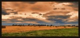 Totara Harvest. by LynEve, photography->sunset/rise gallery