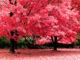 Autumn Fantasy by jojomercury, photography->gardens gallery