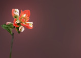 Texas Trip # 8: Indian Paintbrush by PatAndre, Photography->Flowers gallery