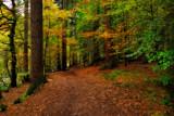 Highland Forest by biffobear, photography->landscape gallery