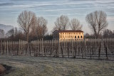 Winter Vines by mirto56, photography->landscape gallery