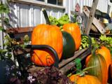 Pumpkin Farm by wheedance, Photography->Still life gallery