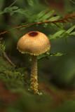 Mushrooms, Moss & Ferns by Salishutter, photography->mushrooms gallery