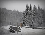 Winter scene by picardroe, photography->landscape gallery